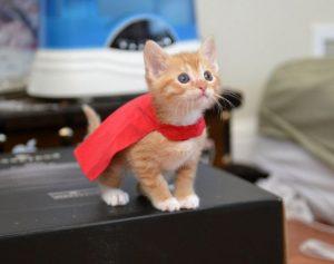 super_kitten